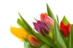 Colored flowers Royalty Free Stock Photography