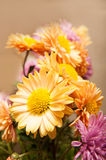 Colored flowers background Royalty Free Stock Image