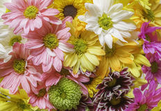 Colored Flowers. Background with many colored flowers of different species Stock Photos
