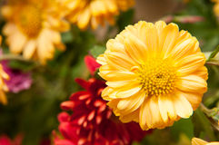 Colored flowers. Bouquet in detail view stock photos