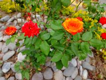 Colored flowers, leaves and stones Royalty Free Stock Photo