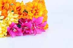 Colored flowers on white background. Many colored flowers on white background Royalty Free Stock Images