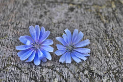 Colored flowers on wooden surface Royalty Free Stock Images