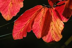Colored foliage Royalty Free Stock Photography