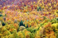Colored forest Royalty Free Stock Images