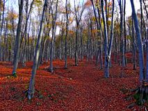 Colored forest Stock Images