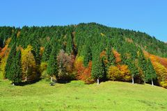Colored forest Royalty Free Stock Photography
