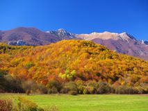 Colored forest in the fall. Mountain in the background Royalty Free Stock Images