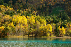 Colored forest with lake Stock Images