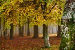 Autumn landscape. Mystic colored foggy forest Stock Images