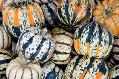 Colored gourds Stock Photos