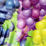 Colored grapes Stock Photos