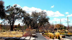 Colored Grass and Bushes. Cover the ground at this natural wildlife site in Santa Fe Royalty Free Stock Photography