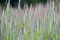 Colored grass in sunlight. Colored grass on a meadow in sunlight Royalty Free Stock Photos