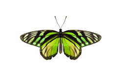 Colored green butterfly on white background Stock Photo