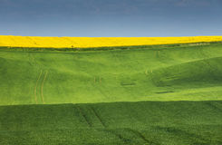Colored green and yellow fields under blue sky. In Czech republic Stock Photos