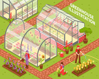 Colored Greenhouse Composition Royalty Free Stock Image