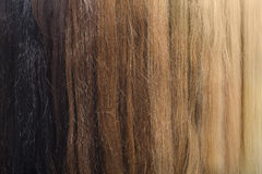 Colored hair samples for female wig Royalty Free Stock Images