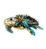 Colored hand drawing caretta. Vector illustration Royalty Free Stock Images