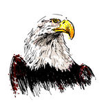 Colored hand drawing eagle Stock Photography
