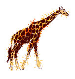 Colored hand drawing giraffe Stock Images