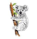 Colored hand drawing koala Stock Photos