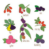 Colored Hand Drawn Botanical Food Set Stock Photos