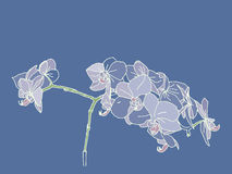 Colored hand drawn spring orchid flowers Royalty Free Stock Images