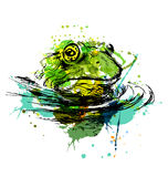 Colored hand sketch of the head of the frog Vector Illustration