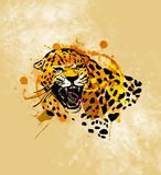 Colored hand sketch head roaring jaguar Royalty Free Stock Image