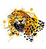 Colored hand sketch head roaring jaguar Royalty Free Stock Photo