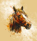 Colored hand sketch horse head on a grunge background Royalty Free Stock Photos