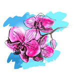 Colored hand sketch orchids Stock Images
