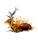 Colored hand sketch sitting deer Stock Photography