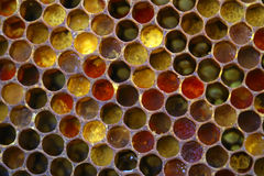 Colored honeycombs. Honey and pasture for food and healthy lifestyle Royalty Free Stock Photo