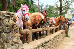 Colored horses Royalty Free Stock Photo