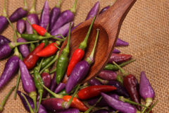 Colored Hot peppers  in wood spoon Stock Photography