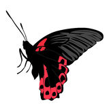 Colored icon beautiful black and pink butterfly on white Royalty Free Stock Photo