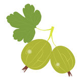 Colored icon branch berries green gooseberries on white background Royalty Free Stock Photography