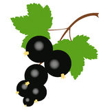 Colored icon branch of black currant on a white background. Royalty Free Stock Photos