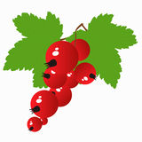 Colored icon branch of red currant berries on a white background Royalty Free Stock Image