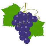 Colored icon a bunch of grapes with leaves and vine. template. For decoration and decor. template for scrapbook or decoupage. vector illustration Royalty Free Stock Images