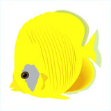 Colored icon of the marine aquarium yellow fish on a white backg. Round. vector illustration. template Royalty Free Stock Photography