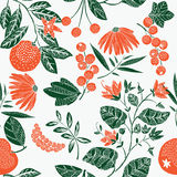 Colored illustration of berries, oranges, leaves Stock Images
