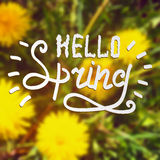 Colored illustration with chalk drawn  text ''hello spring'' on blurred background with blooming dandelions. Stock Image