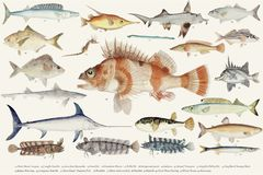 Colored illustration of fish drawing collection Stock Photos