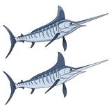 Colored illustration of a marlin fish. Isolated vector objects. Royalty Free Stock Photography