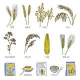 Colored illustrations of cereals. Vector pictures in hand drawn style Stock Images