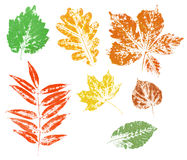 Colored imprint of autumn leaves isolated Royalty Free Stock Photo