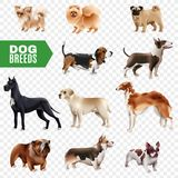Dog Breeds Transparent Icon Set. Colored and isolated dog breeds icon set cute and realistic on transparent background vector illustration Stock Image